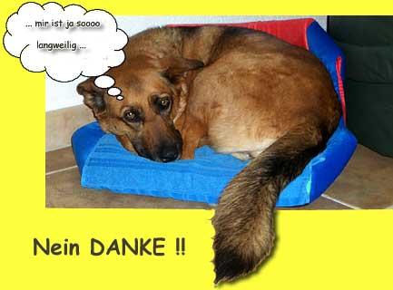 :: Hundeschule Mittelschwaben :: Langeweile - Nein DANKE! ::