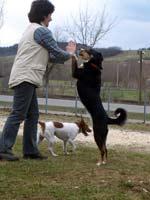 Hundeschule Mittelschwaben :: Tricks Show Fun